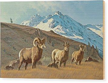 Bighorn Below Electric Peak Wood Print by Paul Krapf