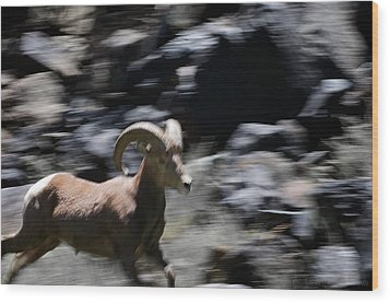 Bighorn Blur Wood Print by Britt Runyon