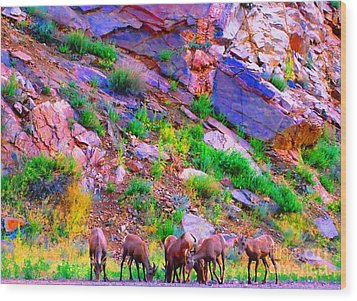 Wood Print featuring the photograph Bighorn Grazing Convention by Ann Johndro-Collins