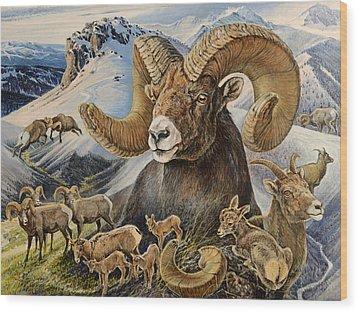 Bighorn Lifescape Wood Print by Steve Spencer