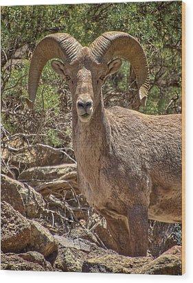 Wood Print featuring the photograph Bighorn Ram by Britt Runyon