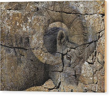 Bighorn Rock Art Wood Print by Steve McKinzie