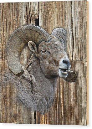 Bighorn Sheep Barnwood Wood Print by Steve McKinzie