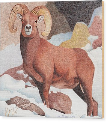 Bighorn Sheep Wood Print by Dan Miller