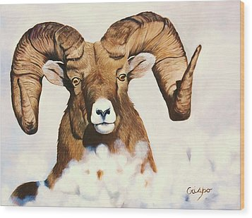 Bighorn Sheep Wood Print by Jean Yves Crispo