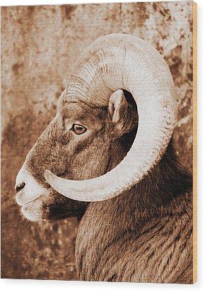 Bighorn Sheep Profile Wood Print by Ramona Johnston