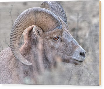 Bighorn Soft Wood Print by Britt Runyon