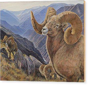 Bighorn Trio Wood Print by Steve Spencer