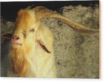 Billy Goat Gruff Wood Print by Karen Wiles