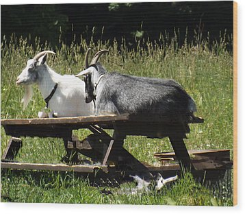 Billy Goats Picnic Wood Print by Brenda Brown