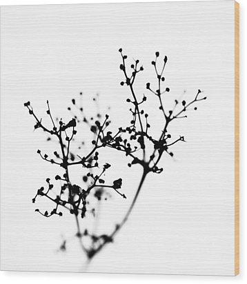 Biochemistry Of Winter 2 Wood Print