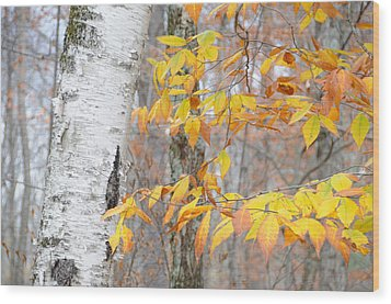 Wood Print featuring the photograph Birch And Beech by Paul Miller