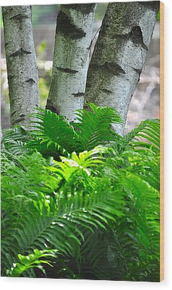 Birch And Fern Wood Print by Jeremy Evensen