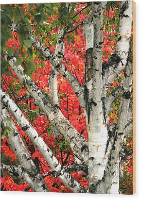 Wood Print featuring the photograph Birch Eclipsing Maple by Doris Potter