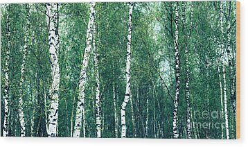 Birch Forest - Green Wood Print by Hannes Cmarits