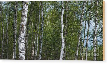 Birch Forest In The Summer Wood Print by Hannes Cmarits
