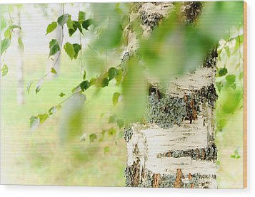 Birch Tree. The Soul Of Russian Nature Wood Print by Jenny Rainbow