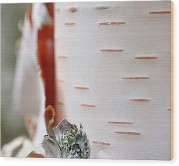 Birch Tree Wood Print by Todd Soderstrom