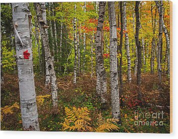 Birch Trees Wood Print by Todd Bielby
