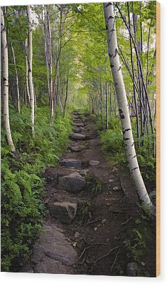 Birch Woods Hike Wood Print