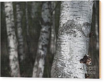 birches II Wood Print by Hannes Cmarits