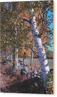 Wood Print featuring the photograph Birches by Mim White