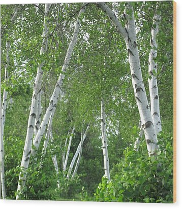 Birches Wood Print by Patricia E Sundik