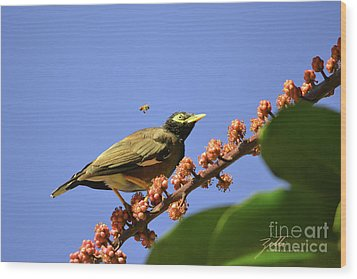 Wood Print featuring the photograph Bird And Bee by Suzette Kallen