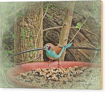 Bird And Feeder Wood Print by Joan  Minchak