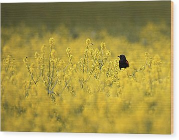 Bird And The Bees Mg_9150 Wood Print by David Orias
