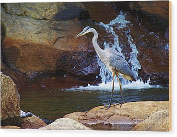 Bird By A Waterfall  Wood Print
