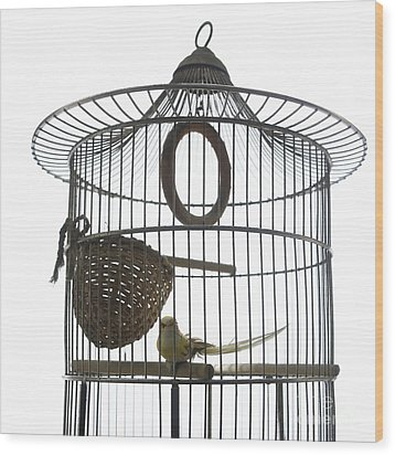Bird Cage Wood Print by Bernard Jaubert