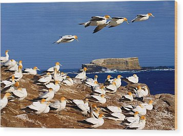 Wood Print featuring the photograph Bird Colony Australia by Henry Kowalski
