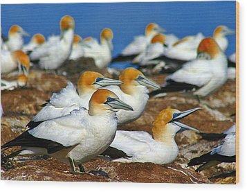 Wood Print featuring the photograph Bird Colony Australia2 by Henry Kowalski