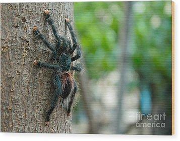 Bird-eater Tarantula / Tarantula Comedora De Aves Wood Print by Daniel Castillo