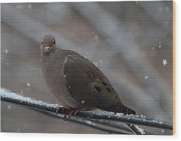 Bird In Snow - Animal - 011312 Wood Print by DC Photographer