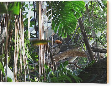 Bird - National Aquarium In Baltimore Md - 12121 Wood Print by DC Photographer
