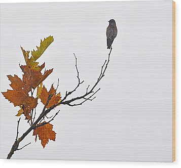 Wood Print featuring the photograph Bird Of Autumn by AJ  Schibig
