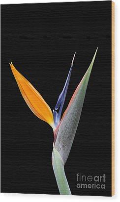 Bird Of Paradise #2 Wood Print