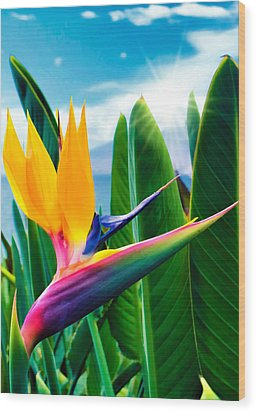 Bird Of Paradise 5 Wood Print