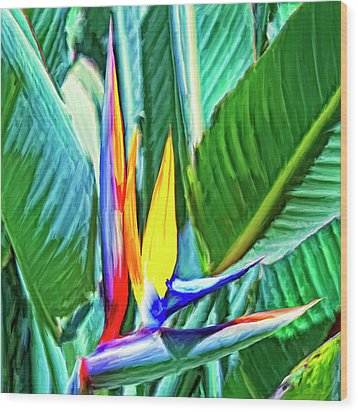 Bird Of Paradise Wood Print by Dominic Piperata