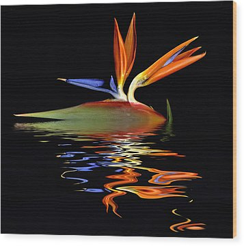 Bird Of Paradise Flood Wood Print by Geraldine Alexander