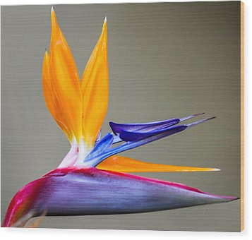 Wood Print featuring the digital art Bird Of Paradise Flower by Photographic Art by Russel Ray Photos