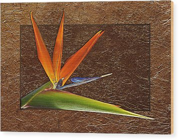 Bird Of Paradise Gold Leaf Wood Print by Phyllis Denton