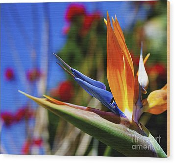 Wood Print featuring the photograph Bird Of Paradise Open For All To See by Jerry Cowart