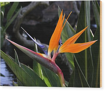 Wood Print featuring the photograph Bird Of Paradise by Robert Lozen