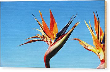 Bird Of Paradise Wood Print by Shawn MacMeekin