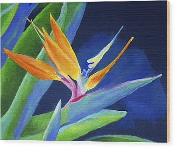 Bird Of Paradise Wood Print by Stephen Anderson