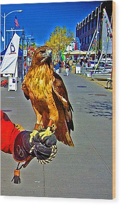 Bird Of Prey At Boat Show 2013 Wood Print by Joseph Coulombe