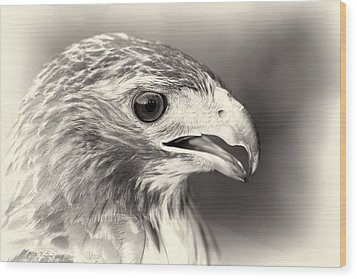 Bird Of Prey Wood Print by Dan Sproul